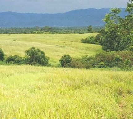 rumput ilalang Wisata Souh Lampung Barat yang tersembunyi